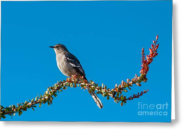 Haybale Greeting Cards - Northern Mockingbird Greeting Card by Robert Bales