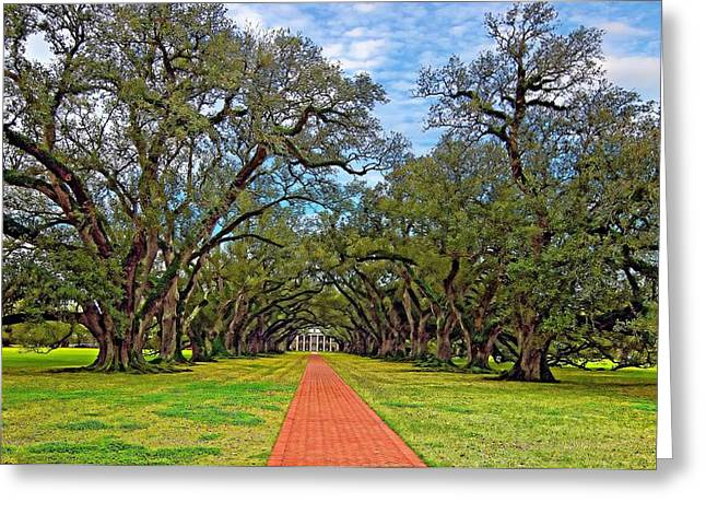 Oak Alley 3 Greeting Card by Steve Harrington