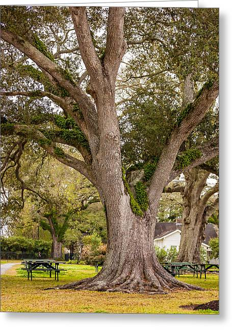 Slaves Photographs Greeting Cards - Oak Alley Backyard Greeting Card by Steve Harrington