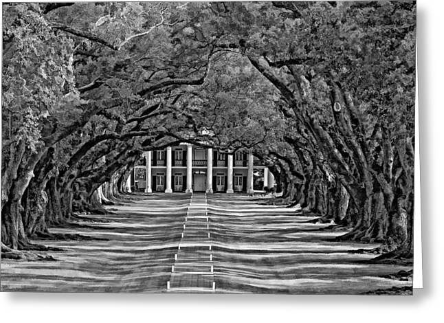 Oak Alley Plantation Greeting Cards - Oak Alley bw Greeting Card by Steve Harrington