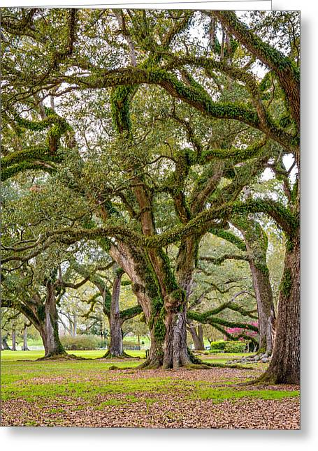 Slaves Photographs Greeting Cards - Oak Alley Plantation Greeting Card by Steve Harrington