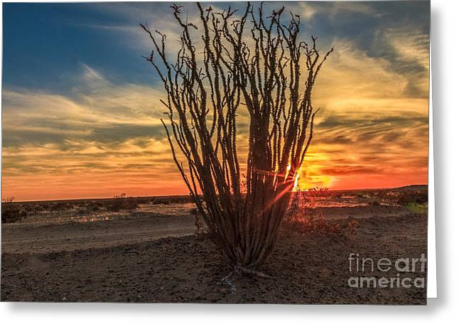 Haybales Greeting Cards - Ocotillo Sunset Greeting Card by Robert Bales
