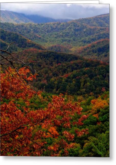Gatlinburg Tennessee Greeting Cards - October Colors In Tennessee Greeting Card by Dan Sproul