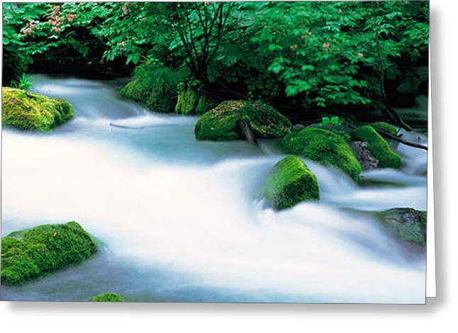 Moss Green Photographs Greeting Cards - Oirase Ravine Aomori Towadako-cho Japan Greeting Card by Panoramic Images