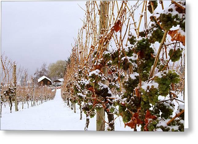 Okanagan Valley Vineyards in Winter Greeting Card by Kevin Miller