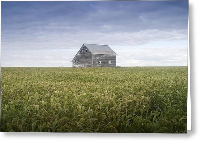 Industrial Concept Greeting Cards - Old House, Manitoba, Canada Greeting Card by Mirek Weichsel