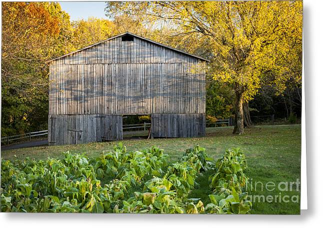 Old Tobacco Barn Greeting Card by Brian Jannsen