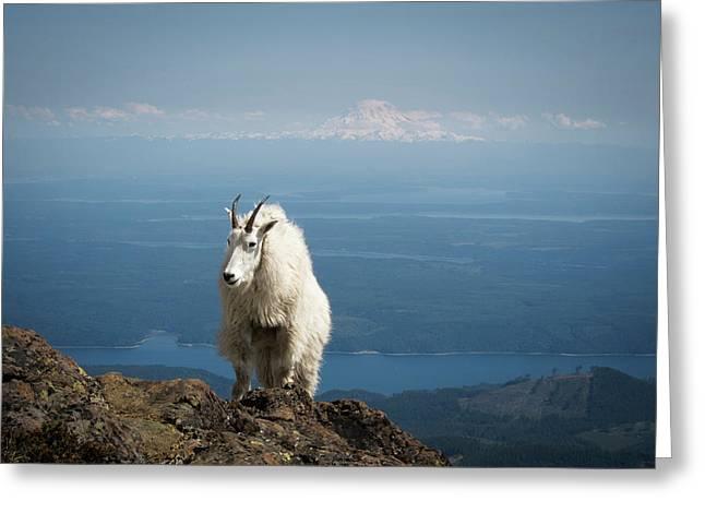 Olympic National Forest, Mount Ellinor Greeting Card by Matt Freedman