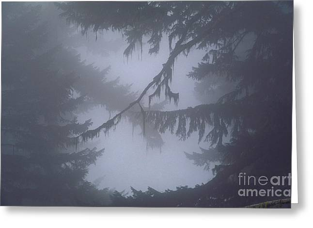 Abstract Rain Greeting Cards - Olympic National Park Greeting Card by Art Wolfe