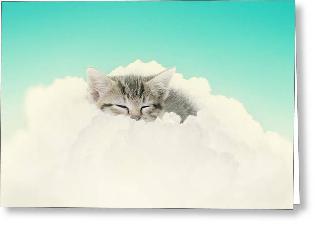 Kitten Prints Greeting Cards - On Cloud Nine Greeting Card by Amy Tyler