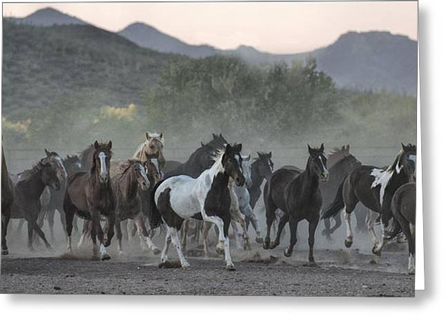 Panoramics Greeting Cards - On The Move Greeting Card by Sandra Bronstein
