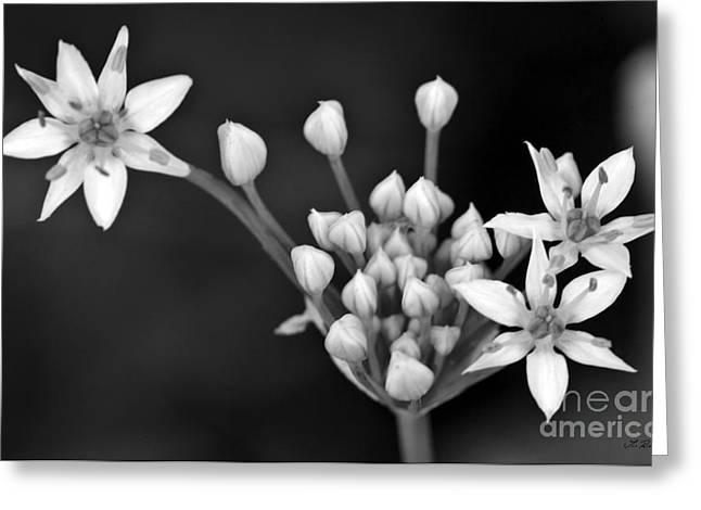 Owner Greeting Cards - Onion Flower Greeting Card by Iris Richardson