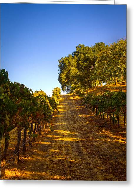 Power Plants Greeting Cards - Opolo Winery Greeting Card by Bryant Coffey