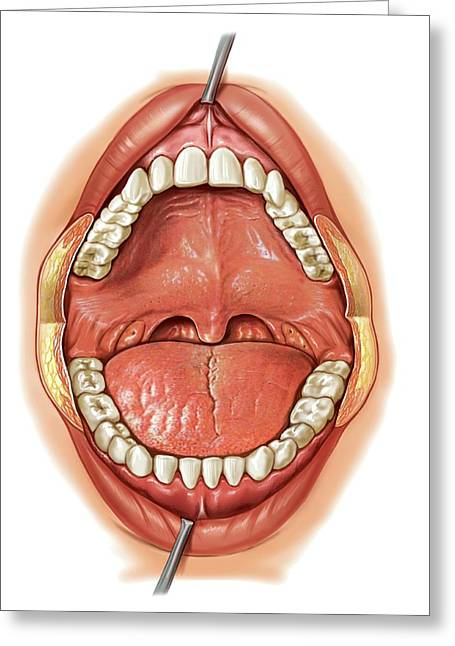Oral Cavity Greeting Card by Asklepios Medical Atlas