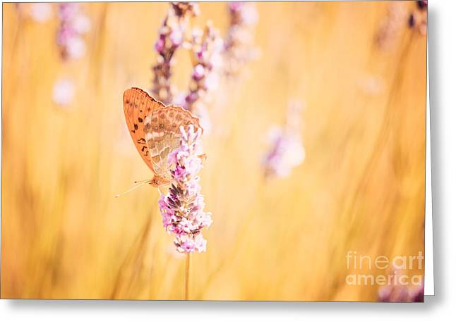 Blooms Butterflies Greeting Cards - Orange butterfly Greeting Card by Matteo Colombo