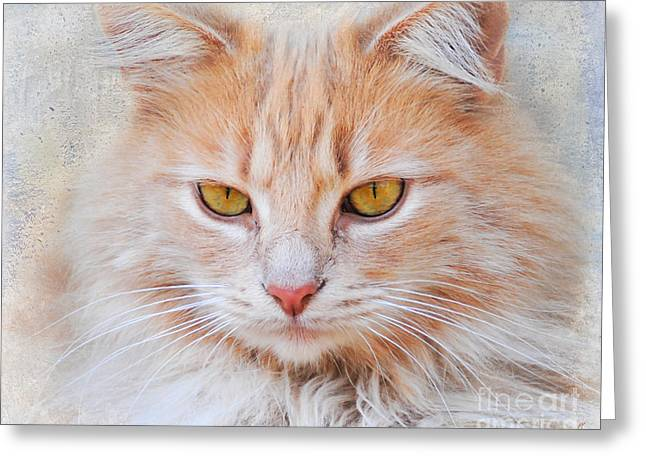Orange Tabby Greeting Cards - Orange Tabby Cat Greeting Card by Jai Johnson