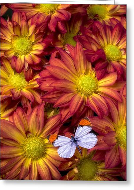 Antenna Greeting Cards - Orange Tip Butterfly Greeting Card by Garry Gay
