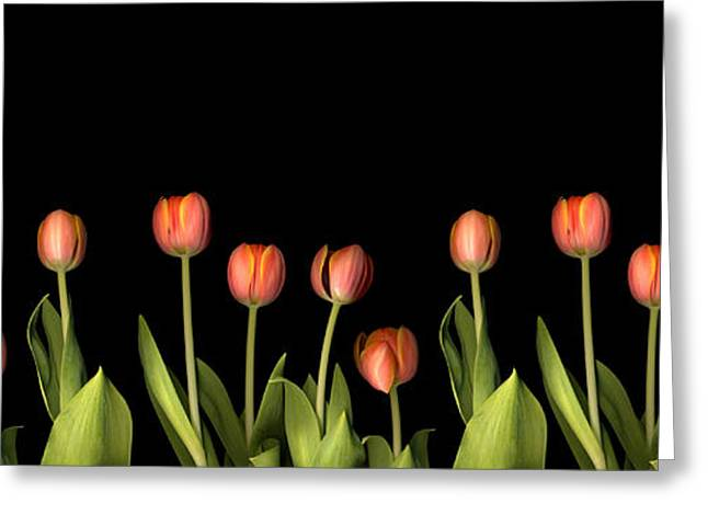 Botany Greeting Cards - Orange Tulips Greeting Card by Jacqui Martin