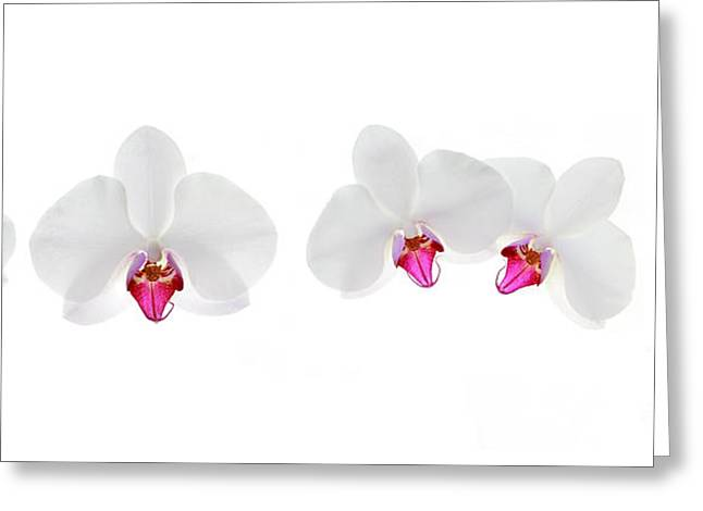 Orchid Flowers Greeting Card by Charline Xia