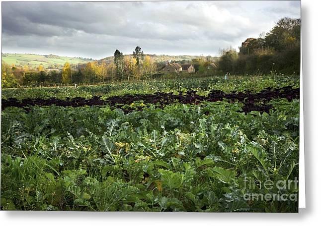 Broccoli Greeting Cards - Organic Farming Greeting Card by Dr. Keith Wheeler