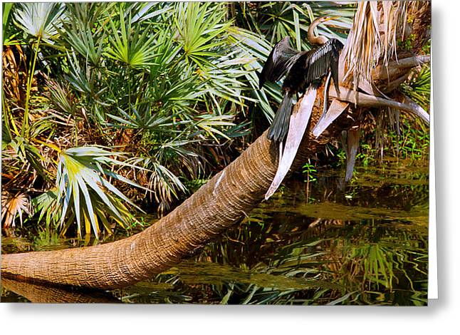 Spread Wings Greeting Cards - Oriental Darter Anhinga Melanogaster Greeting Card by Panoramic Images