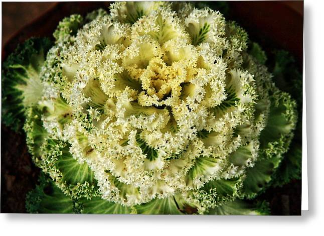 Organically Greeting Cards - Ornamental Cabbage Plant Greeting Card by Aidan Moran