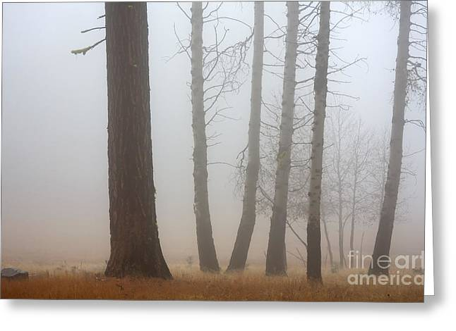Fog Mist Greeting Cards - Out of the Fog Greeting Card by Mike  Dawson