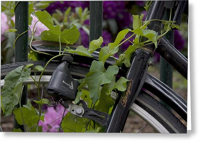 Dynamos Greeting Cards - Overgrown with creepers bike in Amsterdam Netherlands Greeting Card by Ronald Jansen