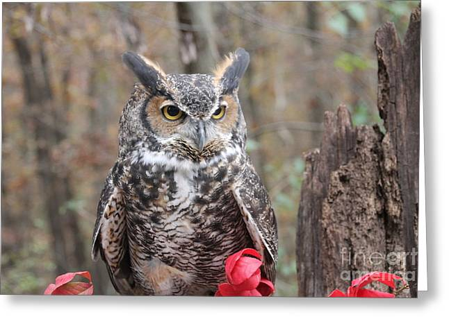 James Pyrography Greeting Cards - Junior Great Horned Owl Greeting Card by Laurie Chrisco