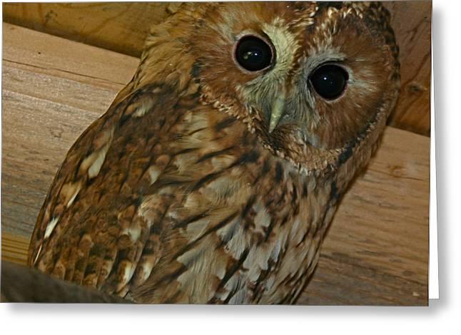 Owl Greeting Cards - #Owl  Greeting Card by Nikitta Noa