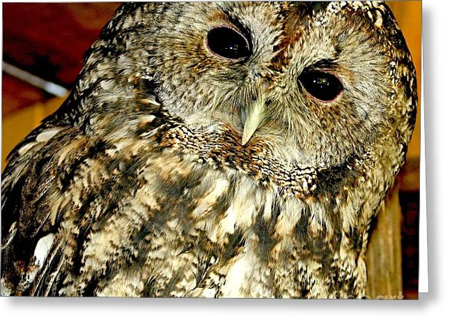 Owl - Strix Aluco Greeting Card by Nikitta Noa