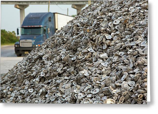 Oyster Shells After Processing Greeting Card by Jim West