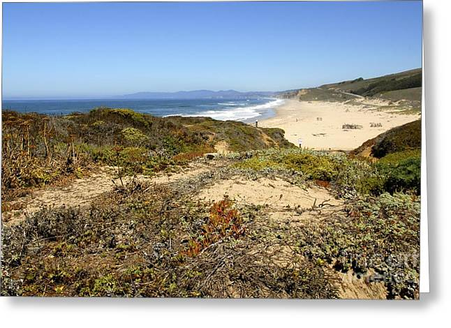 California Beach Greeting Cards - Pacific Coast Greeting Card by Lisa Schafer
