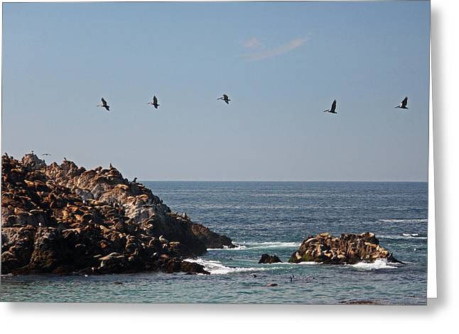 California Sea Lions Greeting Cards - Pacific View V Greeting Card by Suzanne Gaff