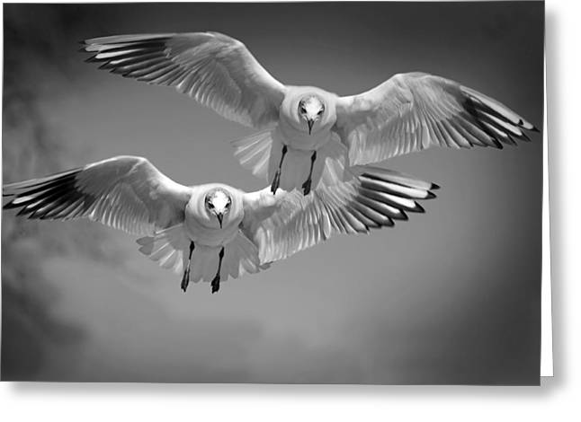 Flying Seagull Greeting Cards - Pair of Seagulls Greeting Card by Mountain Dreams