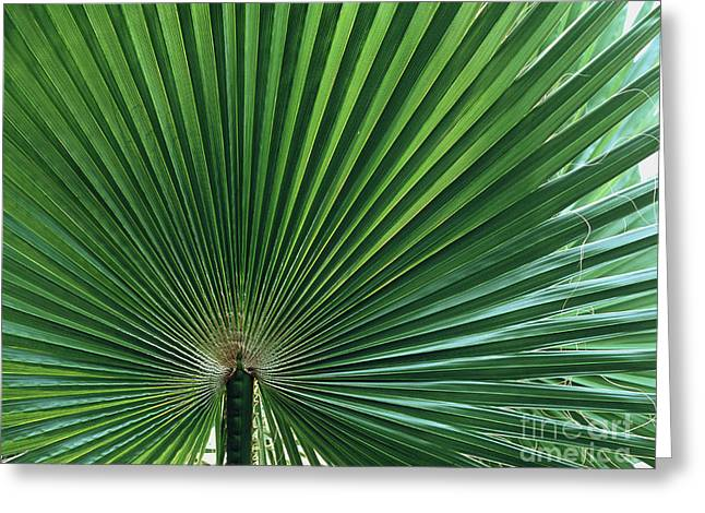 Californian Greeting Cards - Palm Leaf Greeting Card by Vaughan Fleming