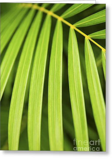 Vitality Greeting Cards - Palm tree leaf Greeting Card by Elena Elisseeva