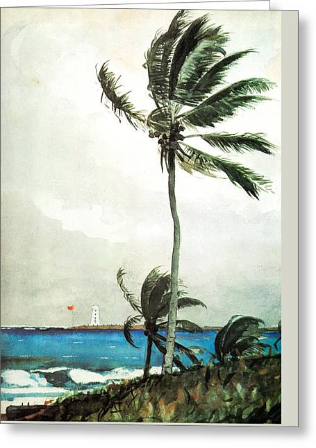 Beach Landscape Drawings Greeting Cards - Palm Tree Nassau Greeting Card by Celestial Images