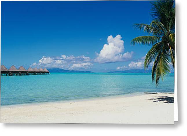 Palm Tree On The Beach, Moana Beach Greeting Card by Panoramic Images