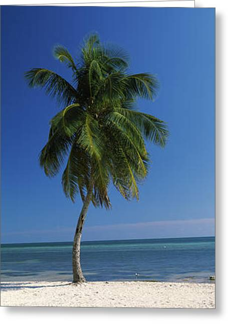 Beach Photography Greeting Cards - Palm Tree On The Beach, Smathers Beach Greeting Card by Panoramic Images