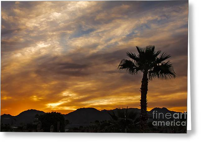 Haybales Greeting Cards - Palm Tree Silhouette Greeting Card by Robert Bales