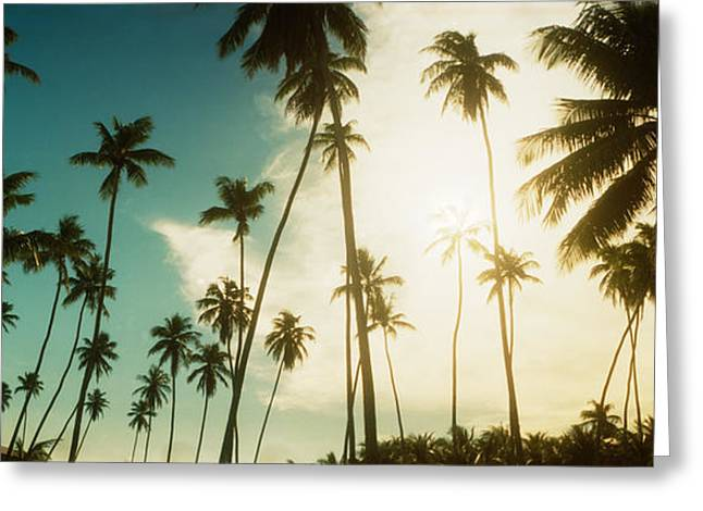 Morros Greeting Cards - Palm Trees Along The Beach In Morro De Greeting Card by Panoramic Images