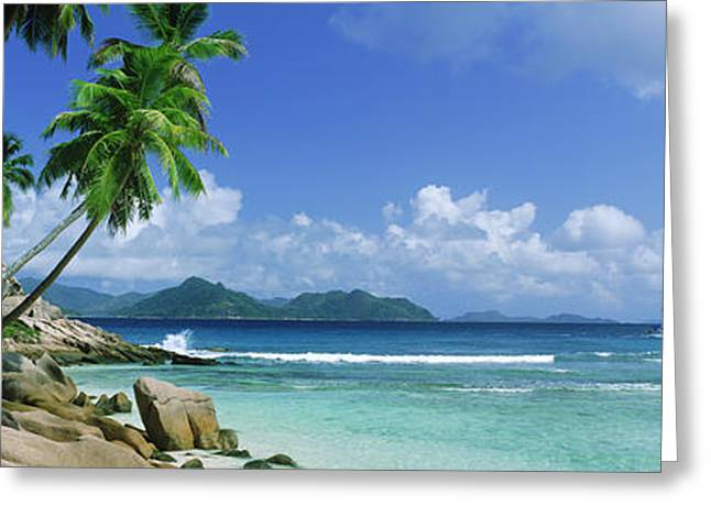 Sailboat Images Greeting Cards - Palm Trees On The Beach, Anse Severe Greeting Card by Panoramic Images