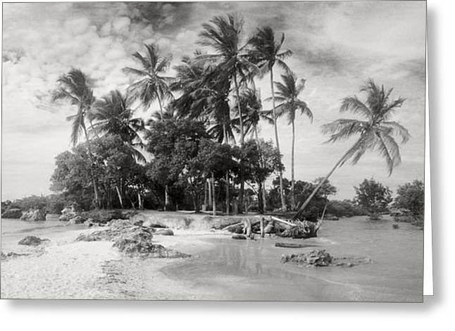 Sao Paulo Greeting Cards - Palm Trees On The Beach, Morro De Sao Greeting Card by Panoramic Images