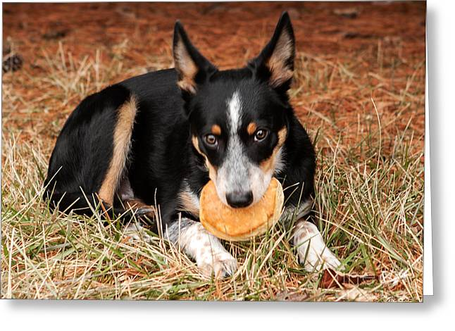 Commercial Photography Greeting Cards - Pancake Dog Greeting Card by Iris Richardson