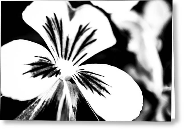 Viola Tricolor Greeting Cards - Pansy Flower Black And White 01 Greeting Card by Alexander Senin