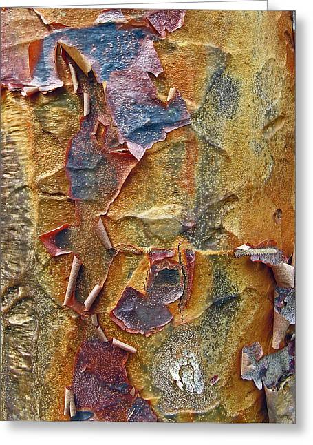 Tree Bark Greeting Cards - Paperbark Maple   Greeting Card by Jessica Jenney