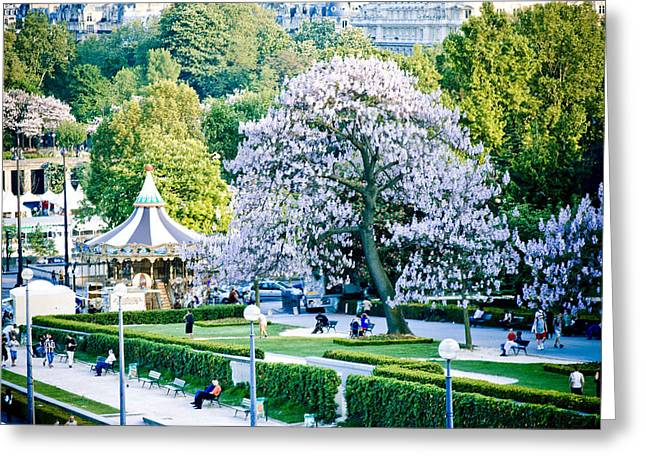 Gray Hair Greeting Cards - Paris the city of blossoming chestnut trees  Greeting Card by Raimond Klavins