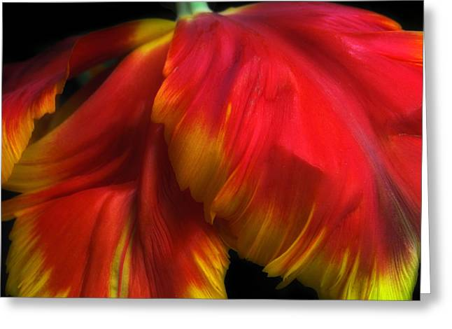 Tulip Petals Greeting Cards - Parrot Petals Greeting Card by Jessica Jenney