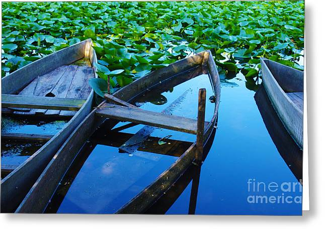 Green Canoe Greeting Cards - Pateira Boats Greeting Card by Carlos Caetano